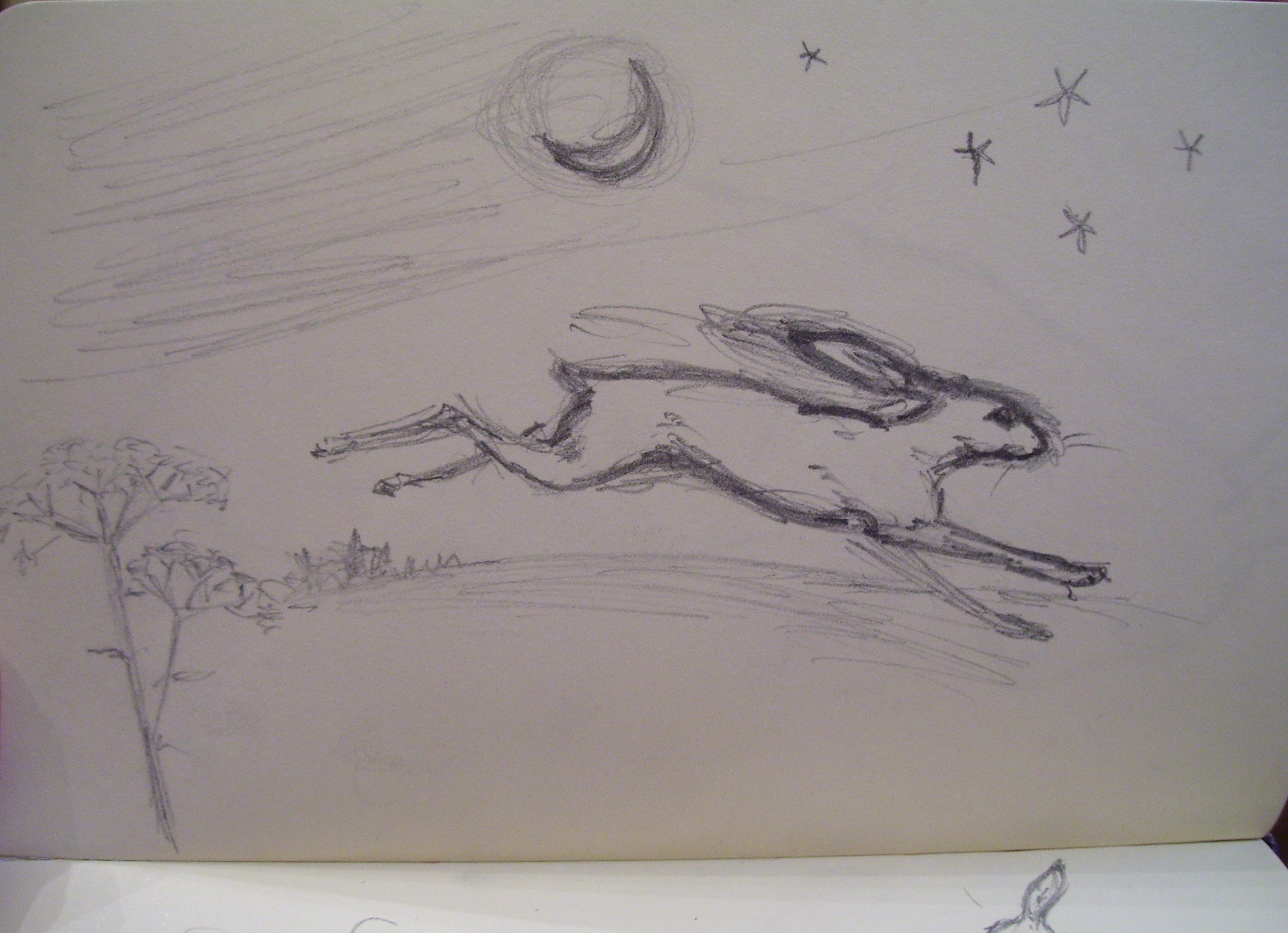 Hare Line Drawings The Calligraphy of Hares