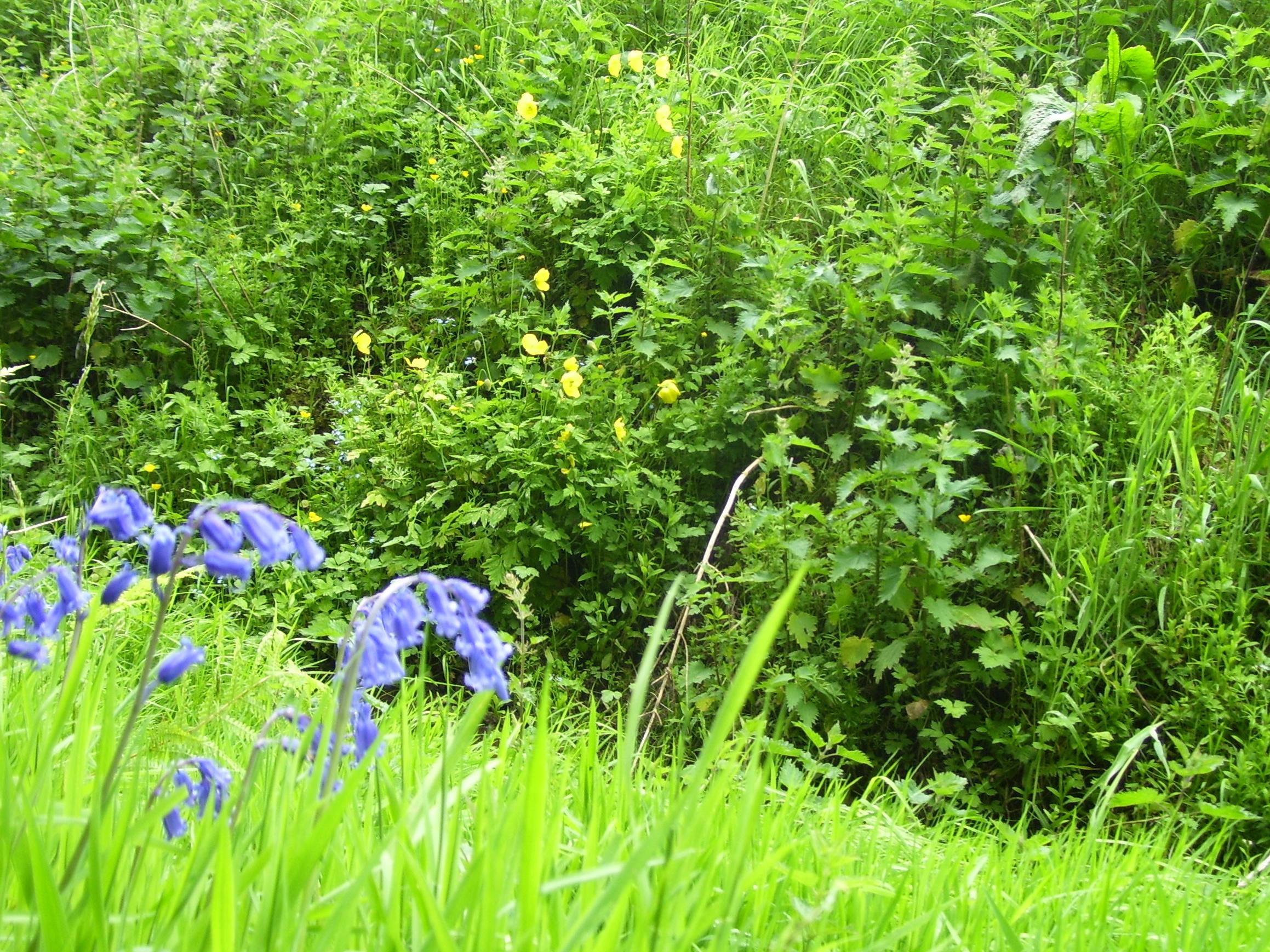 Blooming June Wild Flower Heaven Dancing Beastie