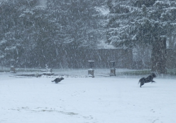 Snow is always good weather as far as dogs are concerned.