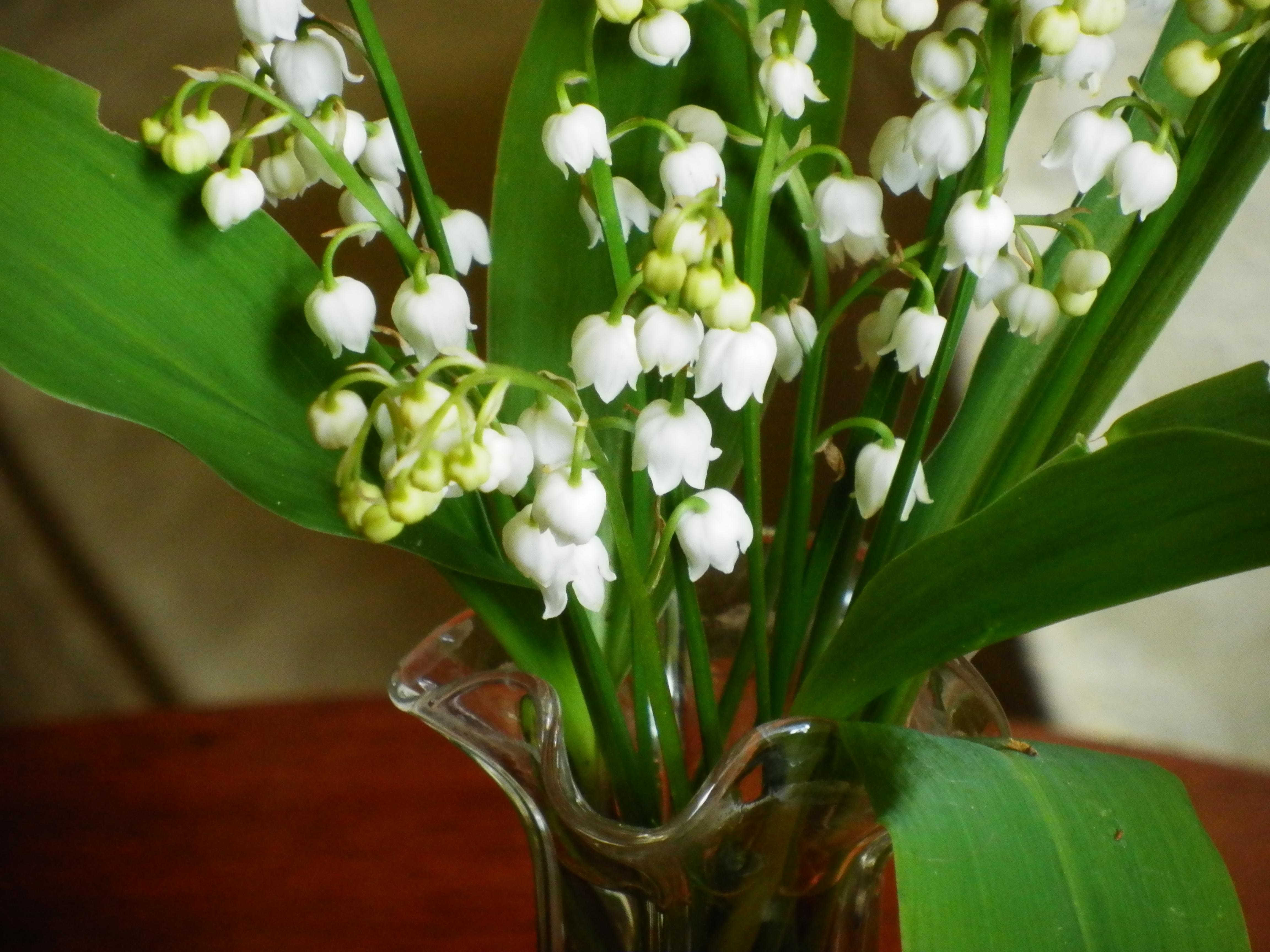 Friday flowers lily of the valley dancing beastie olympus digital camera izmirmasajfo Gallery
