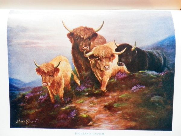 Lillian Cheviot, 'Highland Cattle'