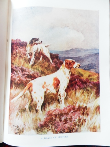 Arthur Wardle, 'A Brace of Setters', from 'The Wonder Book of Nature'