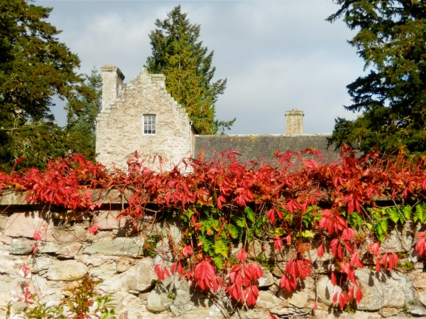 Virginia creeper blazes in front of a wing of the castle
