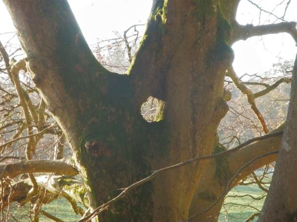 A photo taken in the leafless winter shows it most clearly