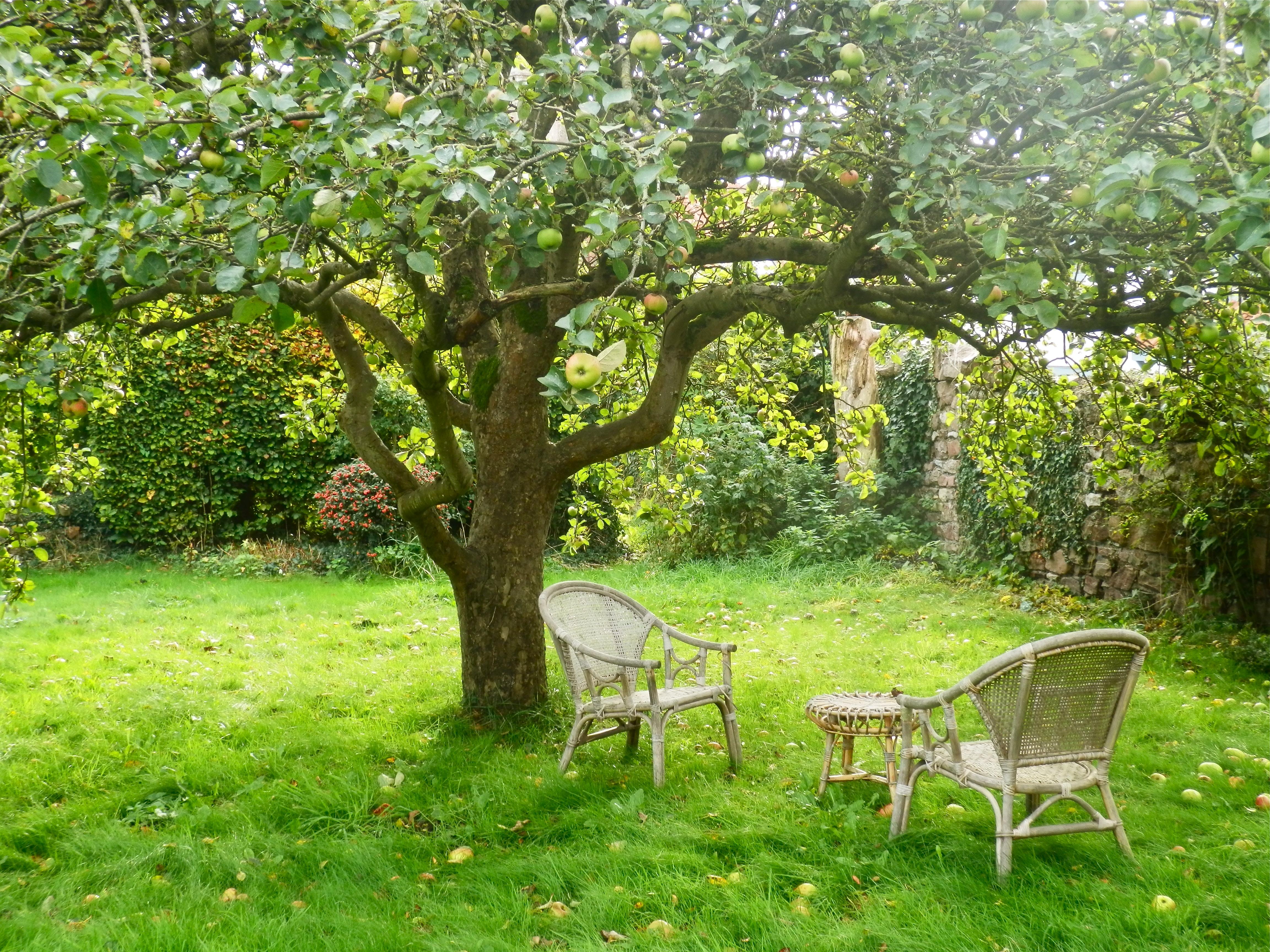 Under an english apple tree dancing beastie for Garden under trees