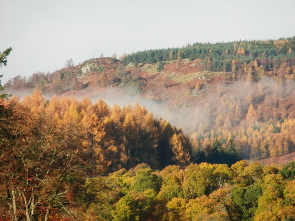 wisps of mist cling to the golden larch woods on the hills above the river