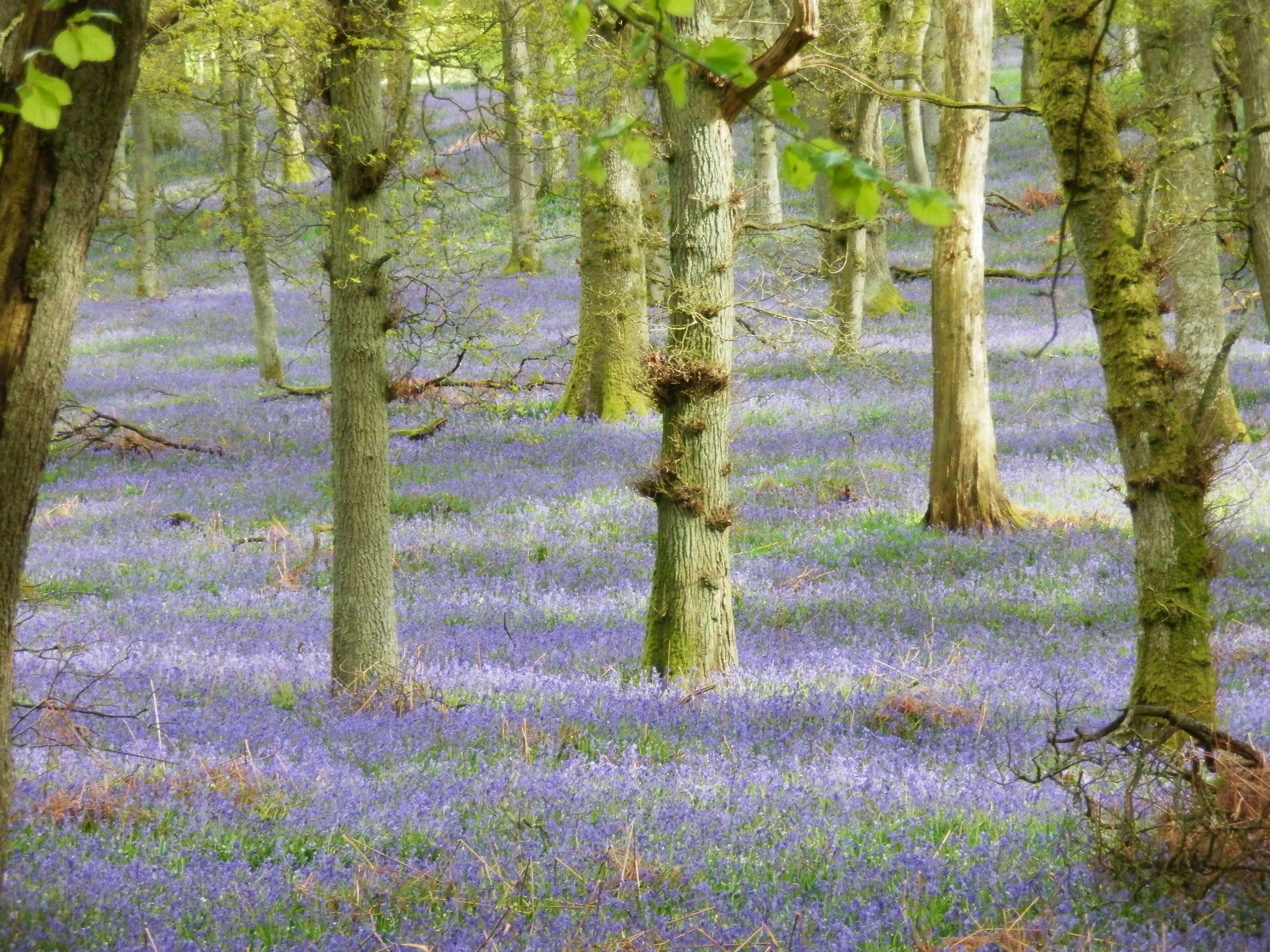 a quiet place by douglas wood lesson plans