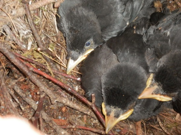 Three squabbling teenagers about to fly the nest
