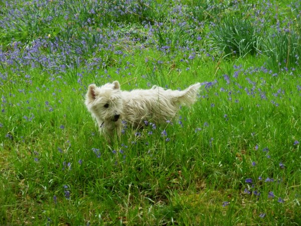 Happy days in the bluebell woods